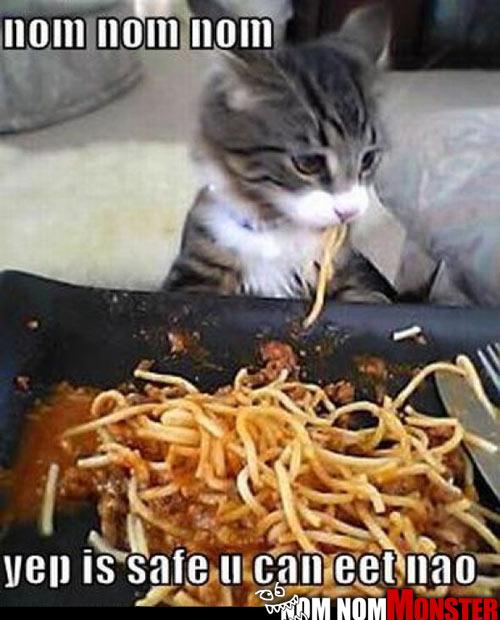 Spagetti Kitty Taste Tester
