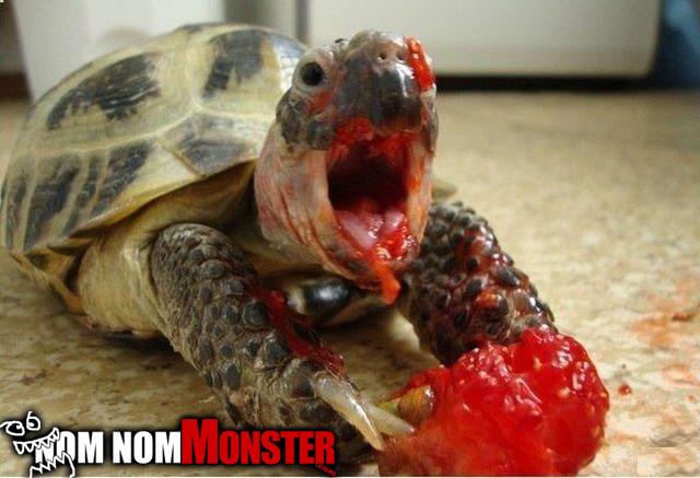 nom-turtle