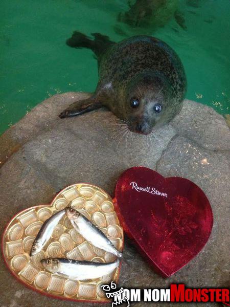 seal-valentines